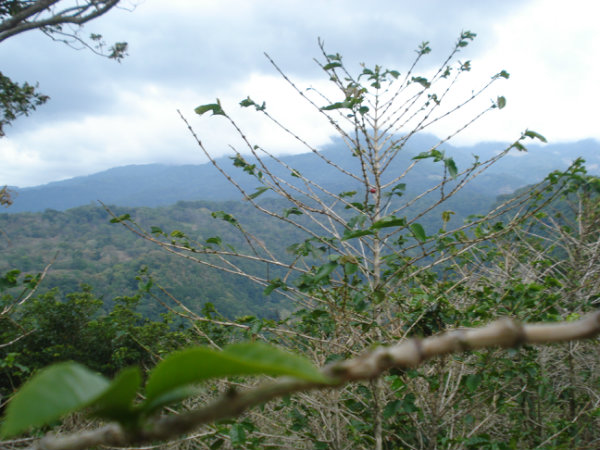 CHIRIQUI BOQUETE LOTS FOR SALE LOCATED IN PALMIRA.