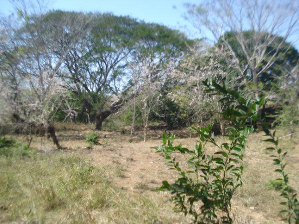 COUNTRYSIDE PROPERTY, FOR SALE, CHITRE, HERRERA, PANAMA, SE VENDE PROPIEDAD