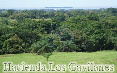 OCEAN VIEW LOT, FOR SALE, 3,500 M2 LOT, PEDASI, LOS SANTOS, PANAMA, LOTE CON VISTA AL MAR, VENDO