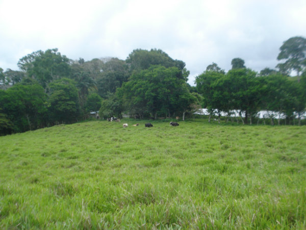 CHIRIQUI RENACIMIENTO, PLAZA CAISAN MOUNTAIN AND OCEAN VIEW FARM