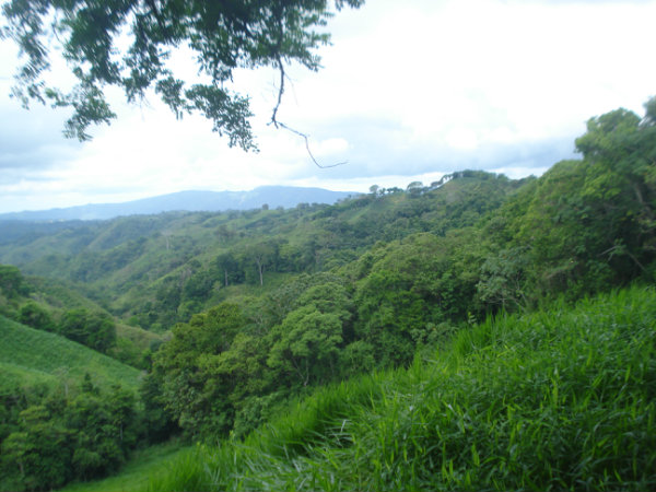 MOUNTAIN VIEW PROPERTY, FARM LAND, FOR SALE, COUNTRYSIDE LOT, CAISAN, VOLCAN, CHIRIQUI, PANAMA, VENDO FINCA