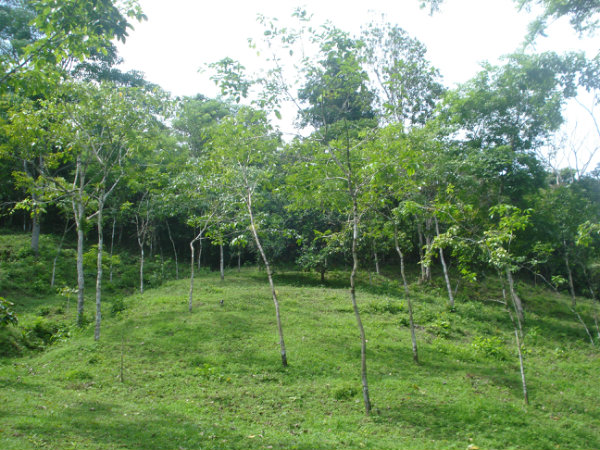 LAND FOR SALE, CERRO AZUL, LIMON, BUENA VISTA, COLON, PANAMA, SE VENDE TERRENO