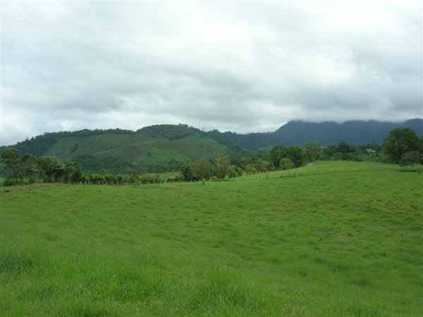 FARM FOR SALE IN POTRERILLOS, BOQUETE, DAVID, CHIRIQUI, PANAMA