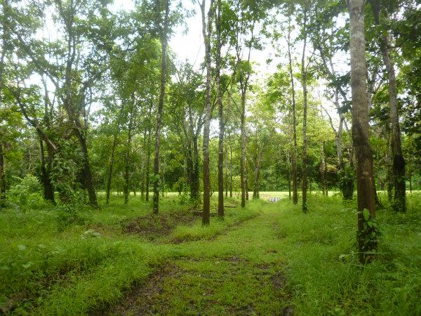 LAND FOR SALE EN DARIEN, YAVISA, PANAMA, SE VENDEN TERRENOS EN DARIEN, RIO TUPISA, RIO CHUQUNAQUE