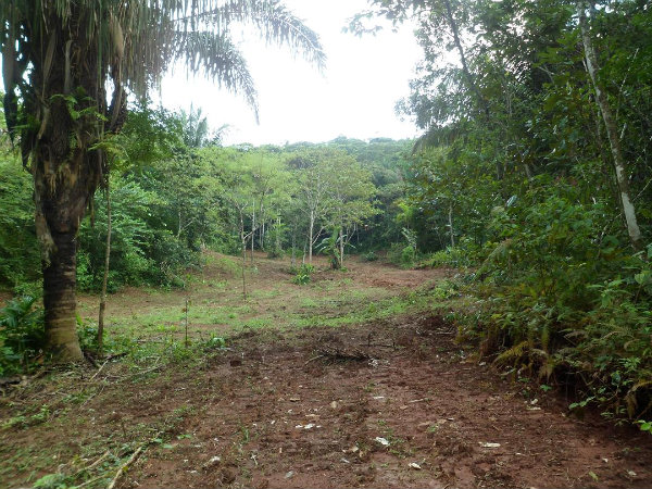 LAND FOR SALE IN PAJONAL, PENONOME, COCLE, PANAMA