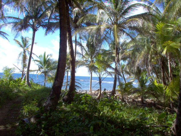 ISLAND OFF THE COAST OF CHIRIQUI, FOR SALE, PANAMA, ISLA FRENTE A LA COSTA DE CHIRIQUI, SE VENDE