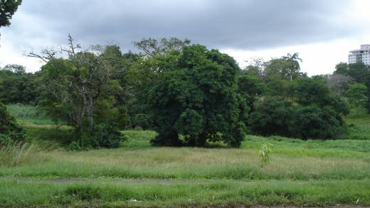 SMALL FARM NEAR SARDINIIA, COLON, PANAMA, FOR SALE