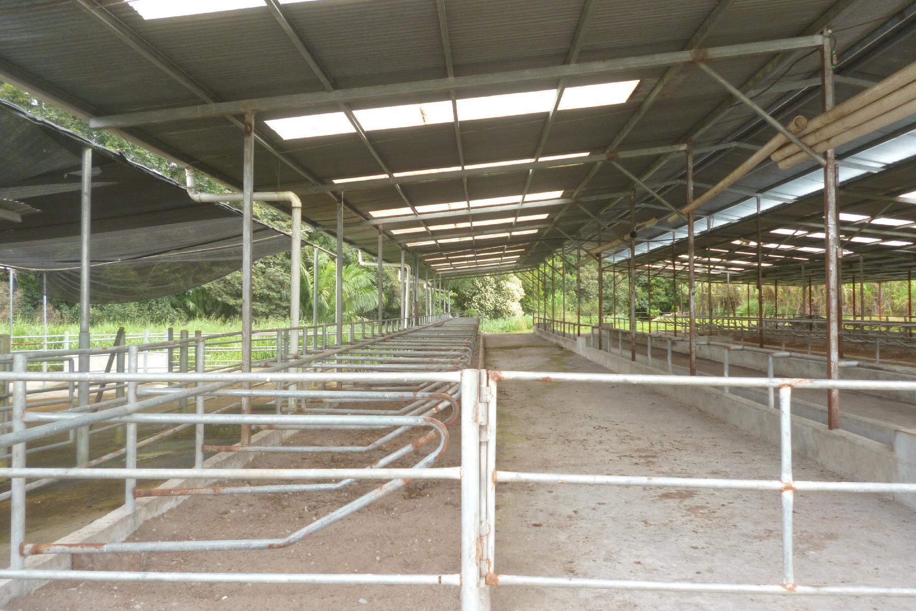 CHIRIQUI, BOQUERON, FARM IN MACANO.