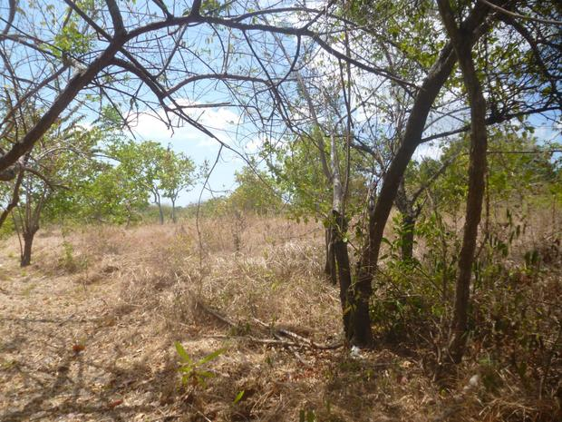 PANAMA OESTE CHAME 2 HECTARES 5 ACRES IN LAS LAJAS