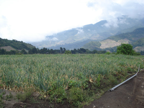 CHIRIQUI CERRO PUNTA LAND FOR SALE.