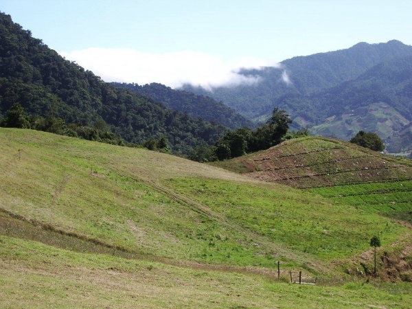 CHIRIQUI CERRO PUNTA LAND FOR SALE IN LAS NUBES.