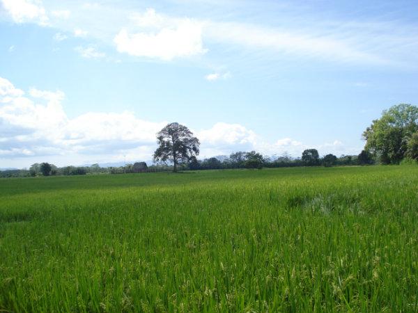 CHIRIQUI BUGABA TURN KEY OPERATION FARM FOR SALE